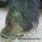 Zentrum für Pferde und Hufgesundheit_2