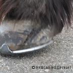 Zentrum für Pferde und Hufgesundheit_3