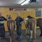 Zentrum für Pferde und Hufgesundheit_4