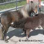 pony01