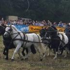 Sport,-Kusch.- und Arbeitspferde
