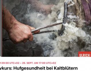 Intensivkurs: Hufgesundheit für Kaltblüter