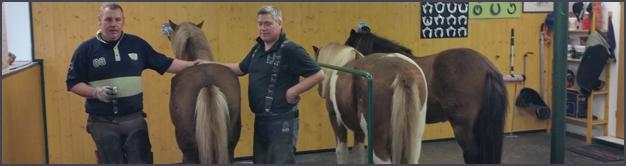 Arbeiten für Zentrum für Pferde und Hufgesundheit